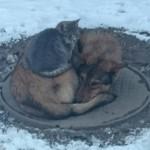 теплый пол для собаки